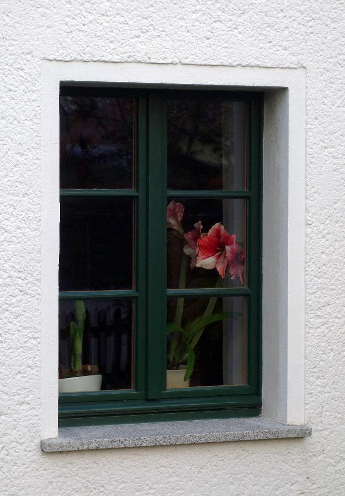 Links Fenster nach Miltitz /Leipzig Christianiagrün außen, innen Kiefernholz ohne Farb- Pigmente geölt.
